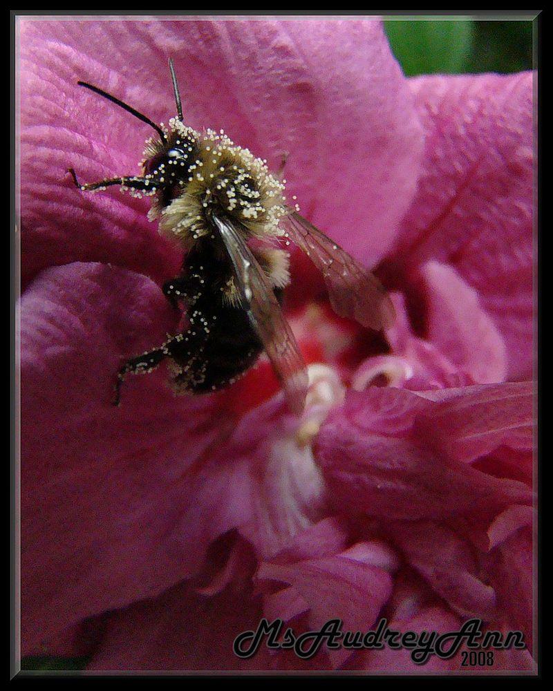 Aad-Bee-Pollen-HR