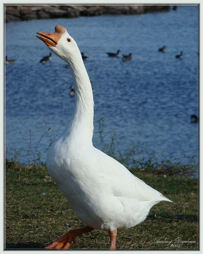 Aad-WhiteBird