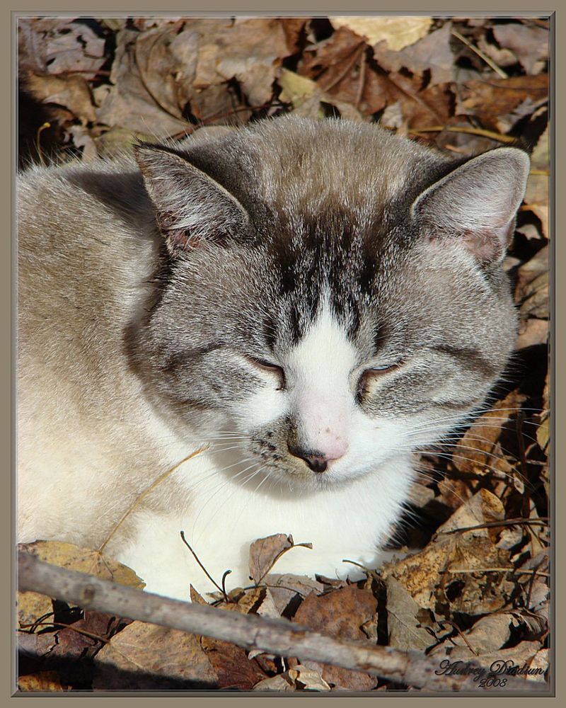 Aad-Brooke-Cat-G