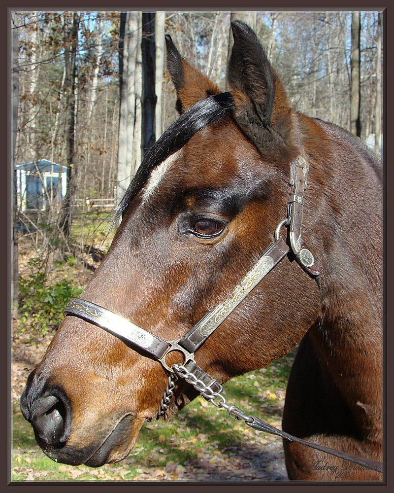 Aad-Brooke-Horse-A