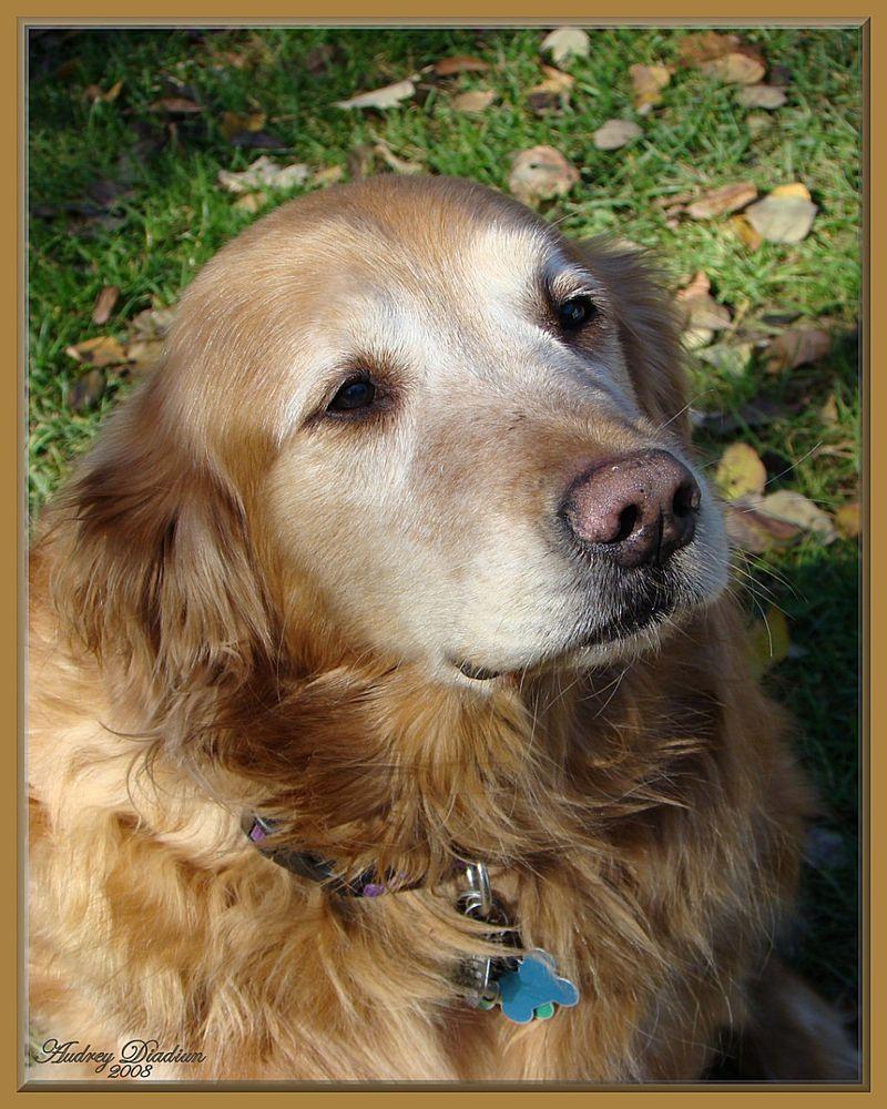 Aad-Brooke-Dog-A