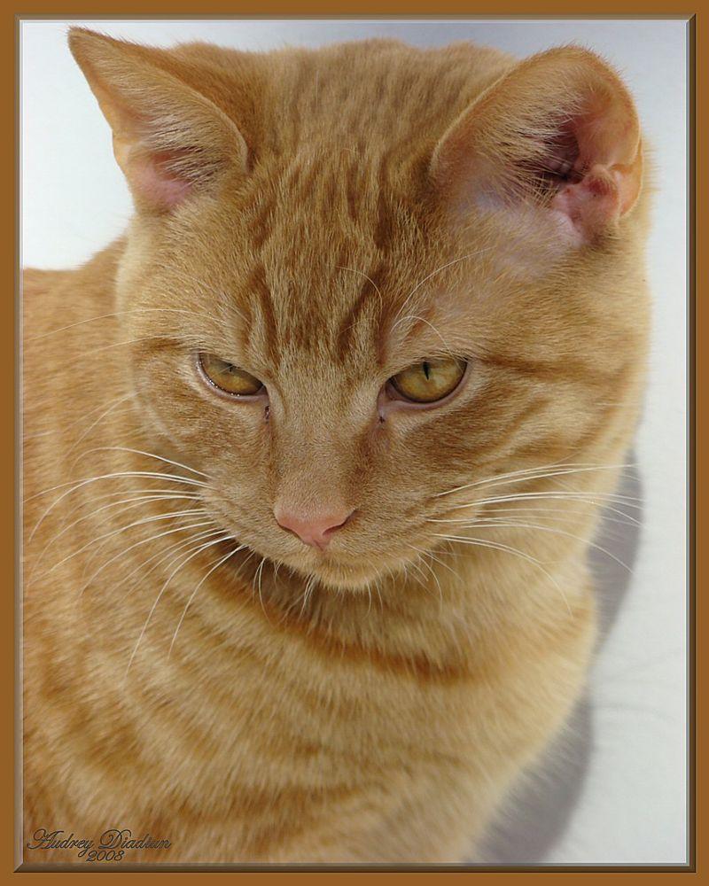 Aad-Brooke-Cat-C