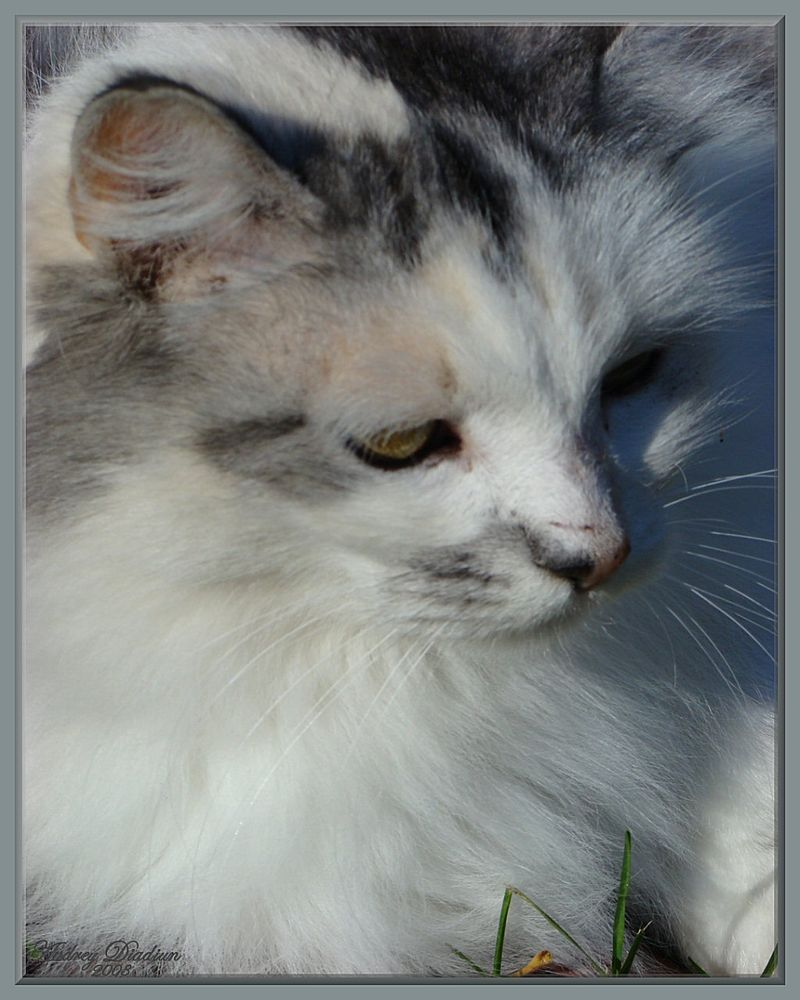 Aad-Brooke-Cat-D