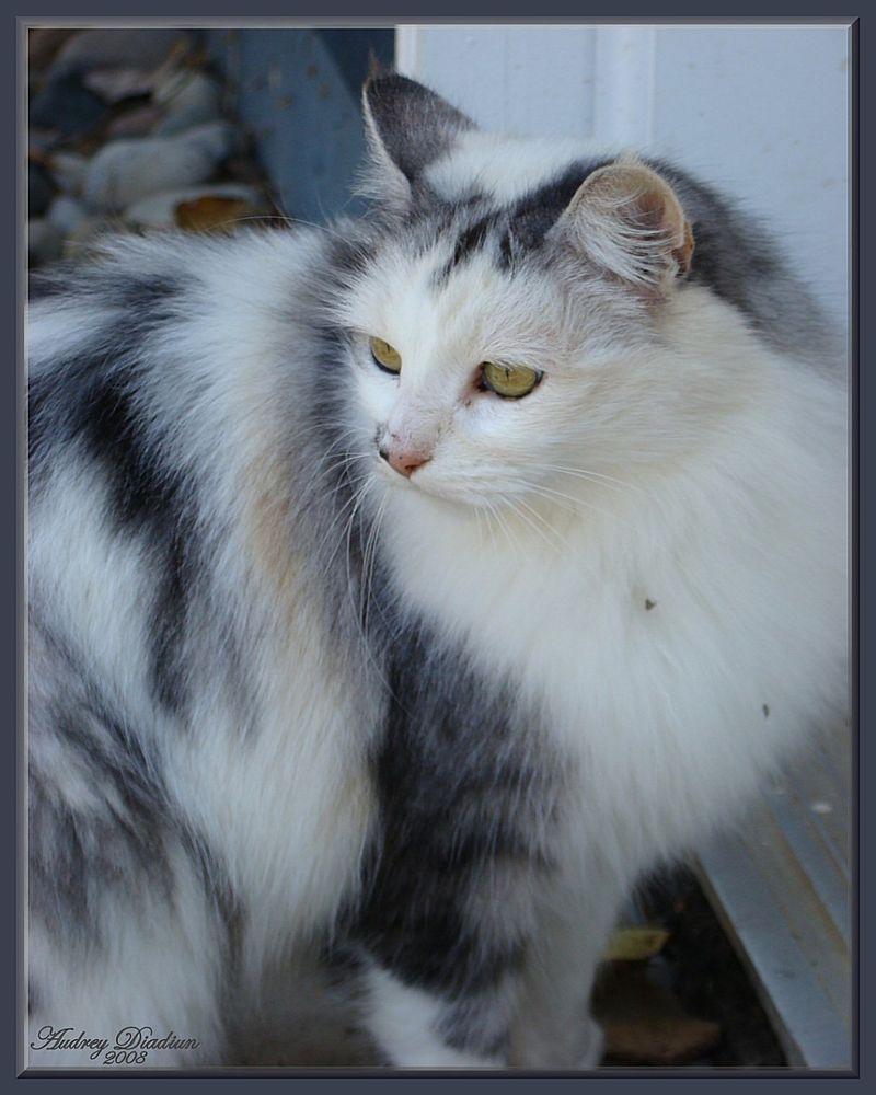 Aad-Brooke-Cat-E