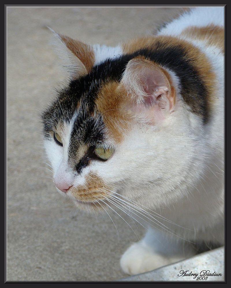 Aad-Brooke-Cat-F
