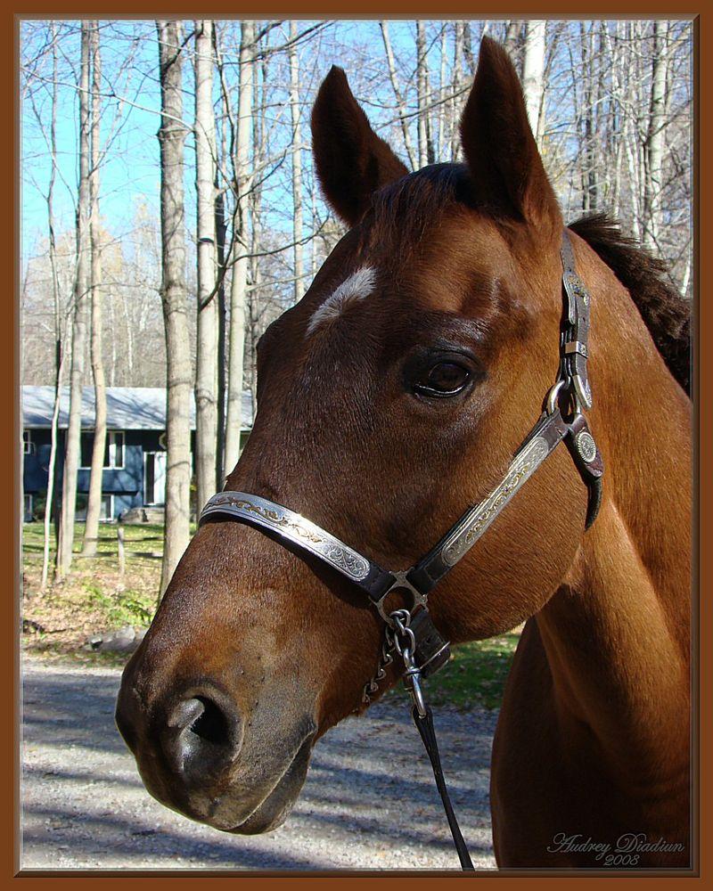Aad-Brooke-Horse-B