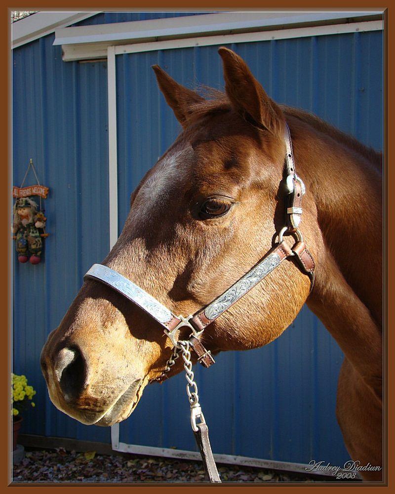 Aad-Brooke-Horse-C