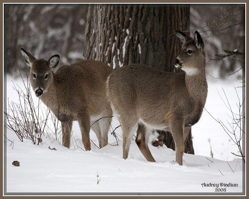 Aad-Deer-Duo-HR