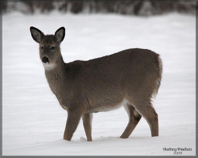 Aad-Deer-HR-B