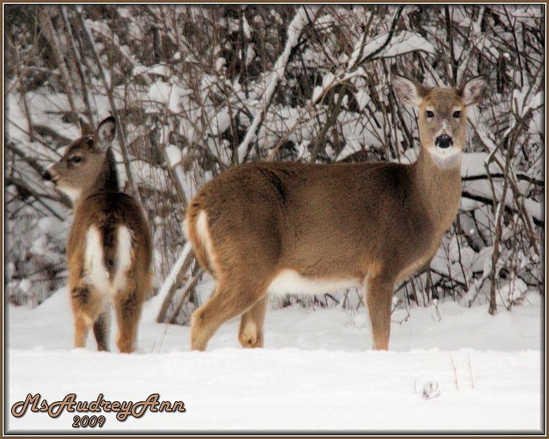 Aad-Deer-2-12-20-08