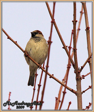 Aad-Sparrow-2-28-09