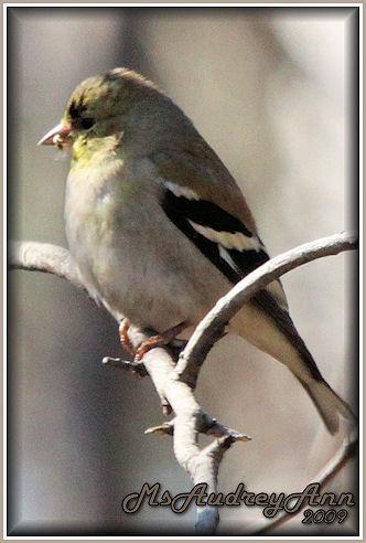 Aad-Finch-3-15-09