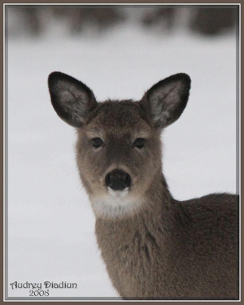 Aad-Deer-HR-A