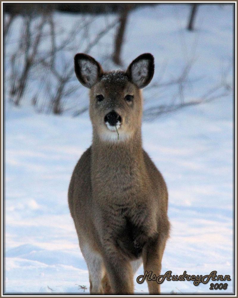 Aad-Deer-12-25-08
