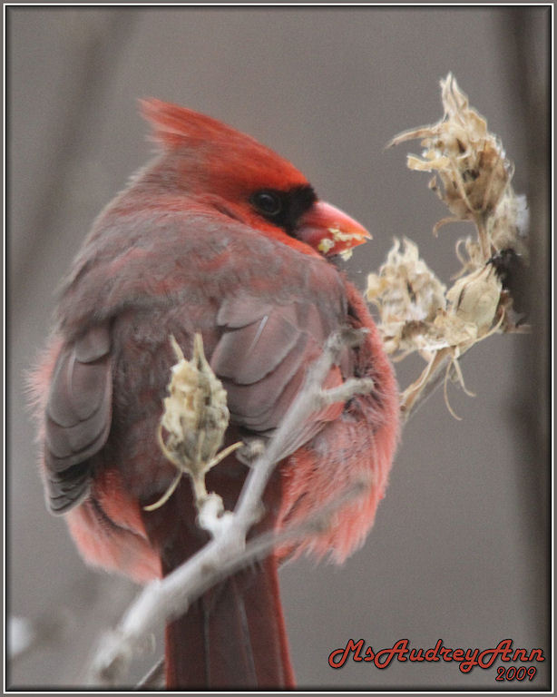 Aad-Cardinal-2-12-09-sm