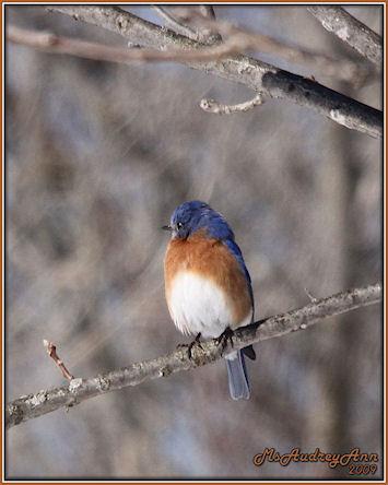 Aad-bluebird-2-23-09-lr-sm