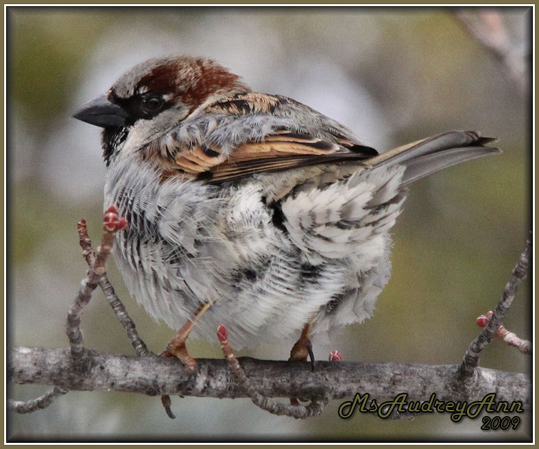 Aad-Sparrow-2-26-09-sm