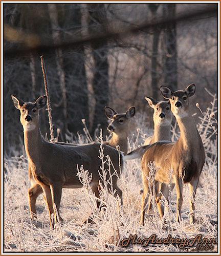 Aad-Deer-3-4-09-sm-lr