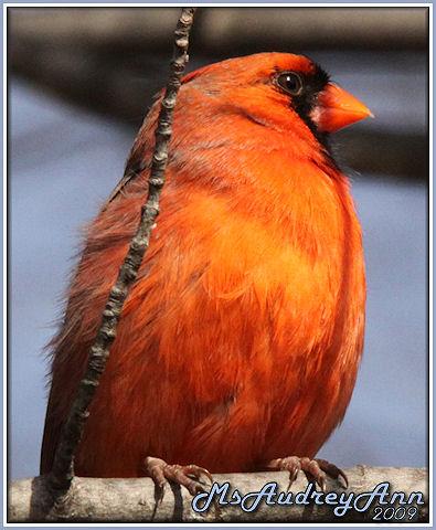 Aad-Cardinal-3-6-09-sm-lr