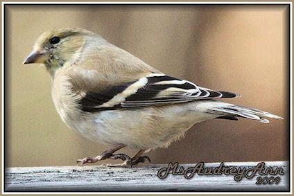 Aad-Finch-A-3-15-09