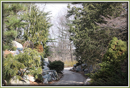 IMG_4491-A