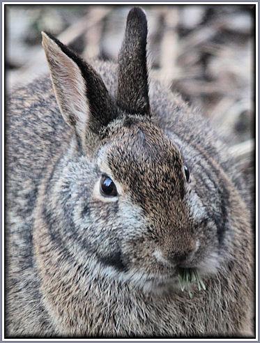 Aad-Rabbit-3-20-09-4636