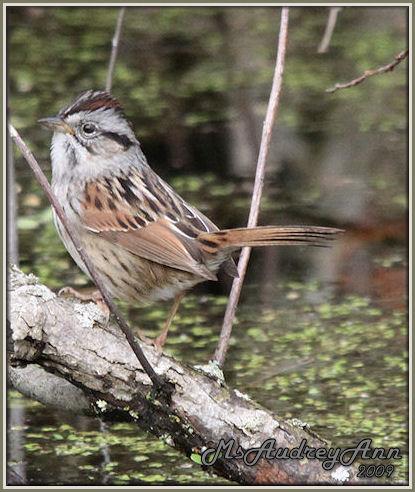 Aad-Sparrow-5-10-09-8166