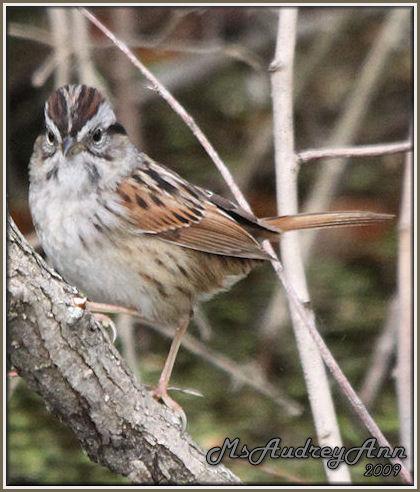 Aad-Sparrow-5-10-09-8167