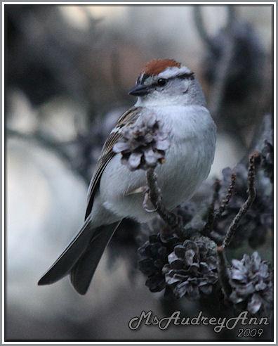 Aad-Sparrow-5-19-09-8864