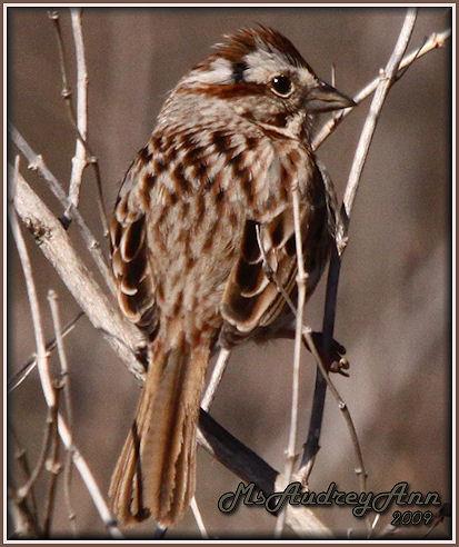 Aad-Sparrow-4-16-09-6372