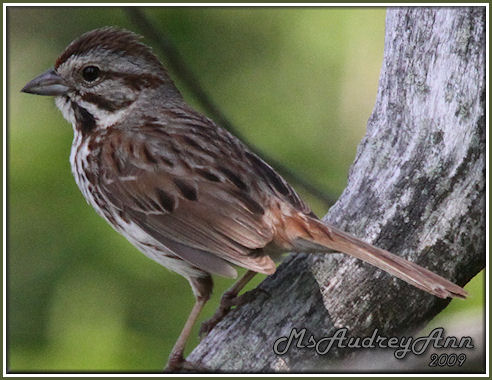 Aad-Sparrow-5-29-09-9053