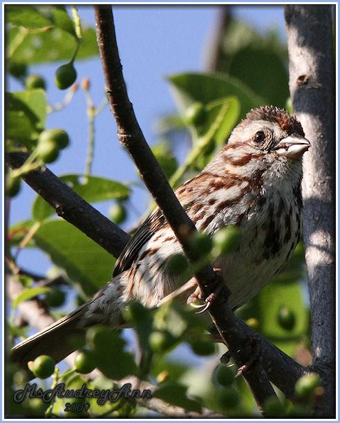 Aad-Sparrow-6-13-09-0304