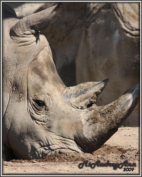 Aad-Rhino-6-25-09-1017