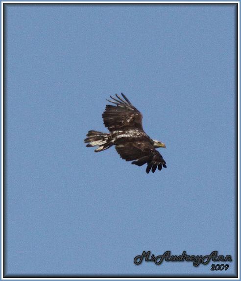 Aad-BaldEagle-6-09-09-3rdYear-0090