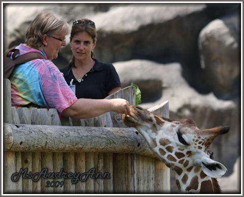 Aad-Giraffe-6-25-09-1108