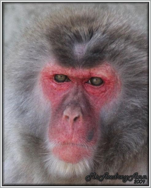 Aad-Monkey-6-25-09-1011