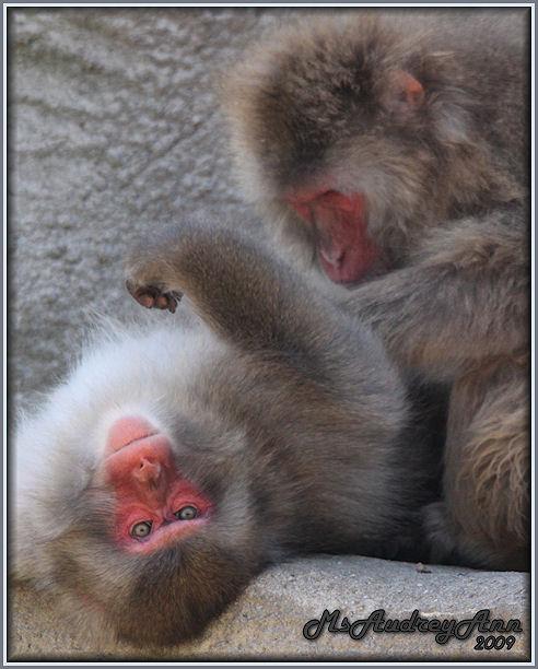 Aad-Monkey-6-25-09-1016