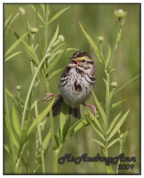 Aad-Sparrow-7-4-09-1404