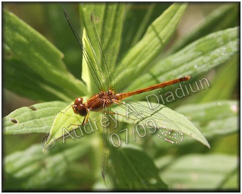 Aad-dragonfly-7-24-09-2323