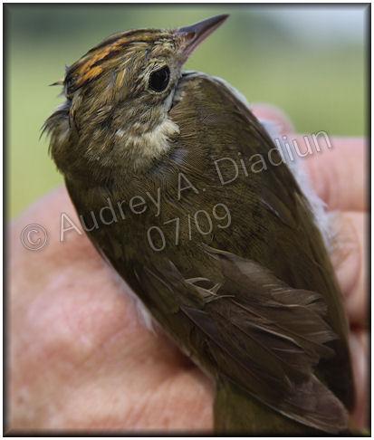 Aad-Overbird-7-24-09-2386