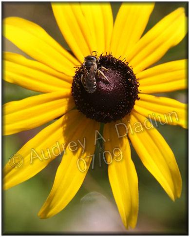 Aad-flowers-7-24-09-2311
