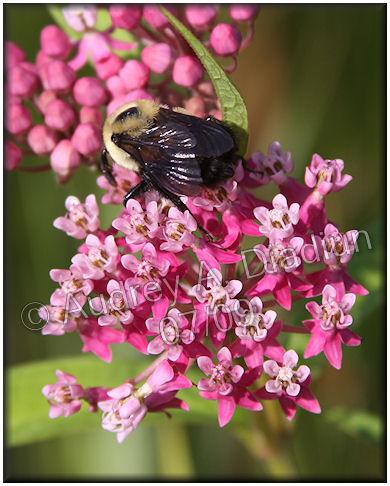 Aad-flowers-7-24-09-2366