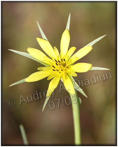 Aad-flowers-7-24-09-2373