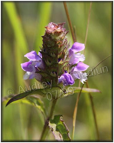 Aad-flowers-7-24-09-2449