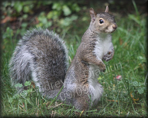 Aad-squirrel-9-26-09-4246