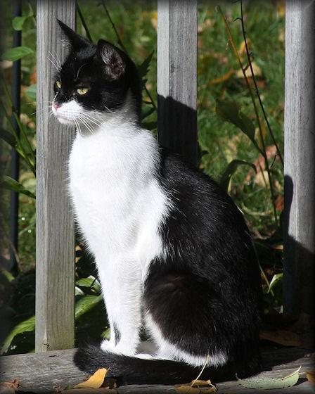 Aad-Kitty-10-13-09-4838