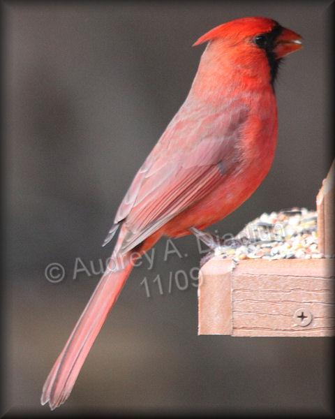 Aad-Cardinal-11-05-09-5213