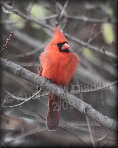 Aad-Cardinal-12-05-09-5710