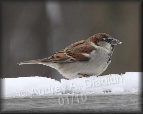 Aad-Sparrow-01-04-10-7536