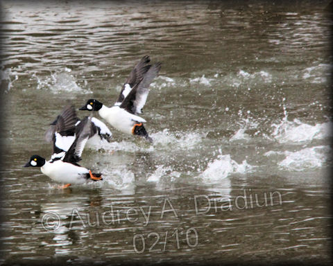 Aad-CommonGoldeneye-2-1-10-9107
